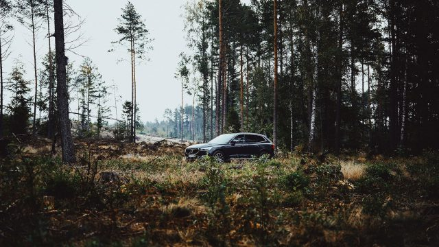 Volvo Car Poland - wypożyczalnia choinek